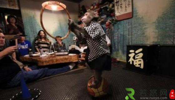 日本最火爆的餐厅之一 猴子当服务生,报酬只要香蕉