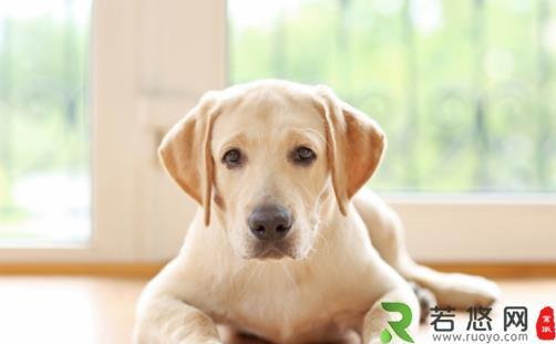 狗狗不会定点上厕所可咋整 训练狗狗定点大小便方法