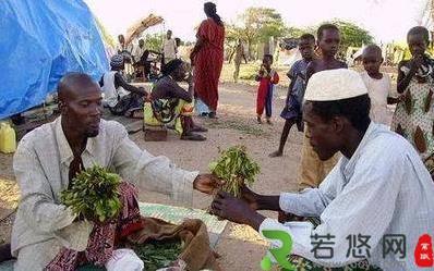 """全世界唯一""""吃树叶""""的国家,把国家吃垮 巧茶称为""""东非罂粟"""""""