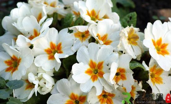 这四类花草养在家里等于不要命 在家养花草要避免健康隐患