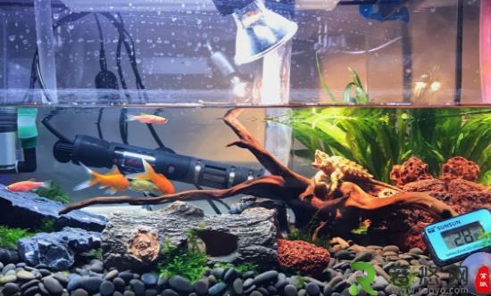家中放鱼缸有利于身体健康 给养鱼新手的一些建议