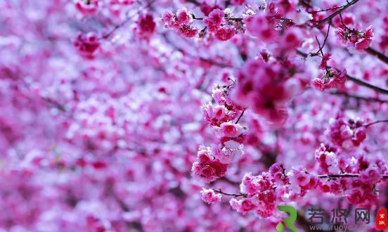 踏青赏花正当时 赏花后如何护理防过敏