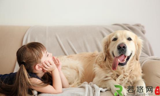 狗狗吃生骨肉的好处 喂食狗狗生肉需要注意的地方